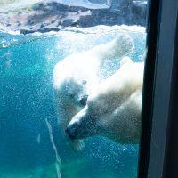 Zoo Hannover  – Eisbär Nana (2020-05-09)