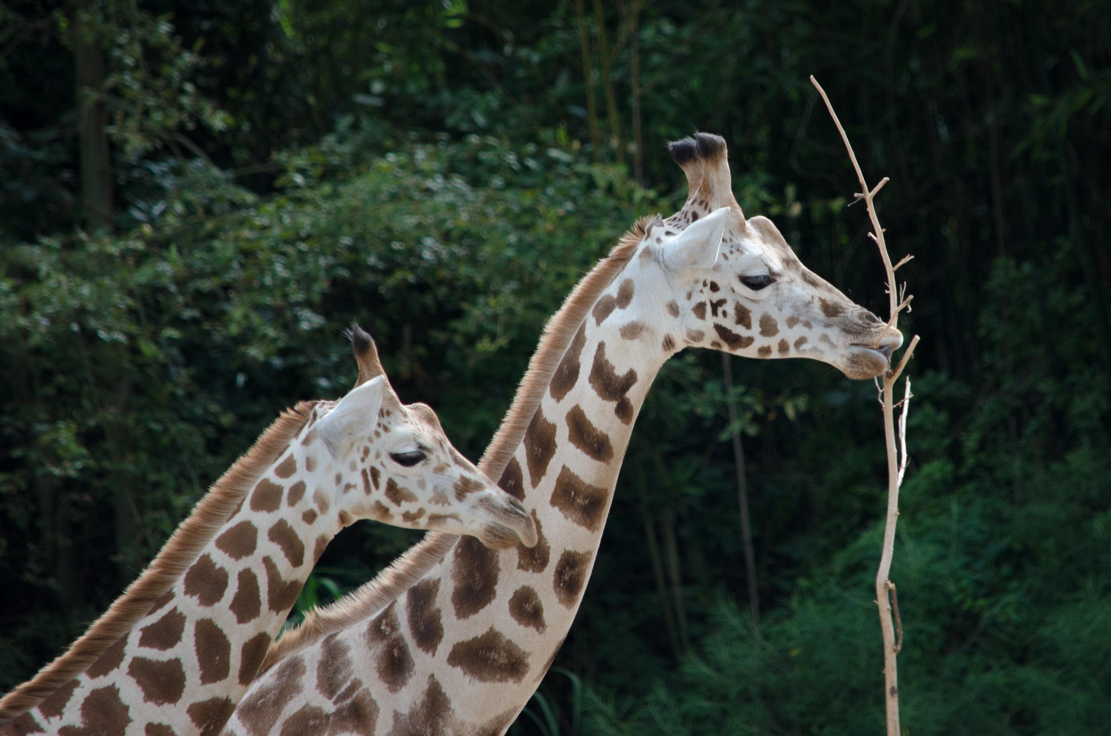 Zoo (07/2014)