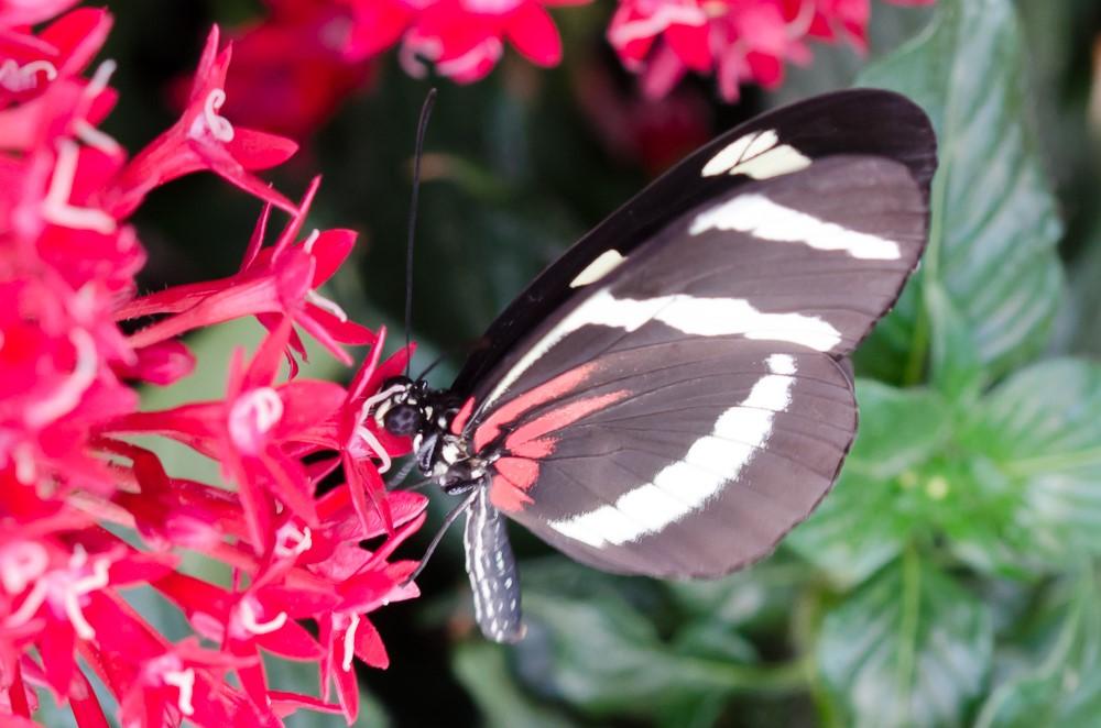 Butterflies in Berggarten Hannover