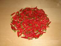web.chiliesokt2007_052.jpg