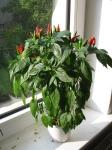 web.chilies_193.jpg