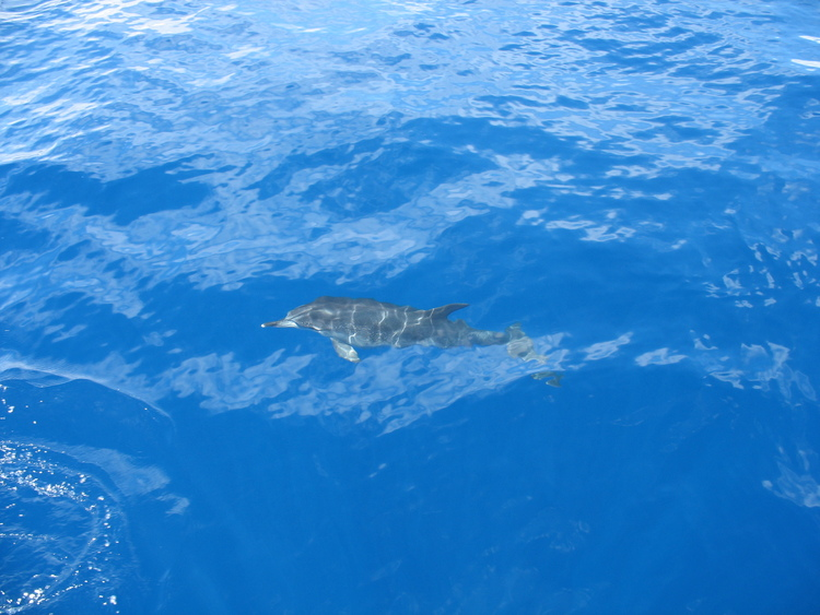 Dolphins05.jpg