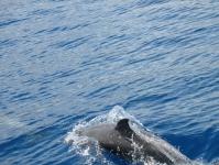 Dolphins03.jpg
