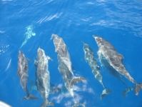 Dolphins04.jpg