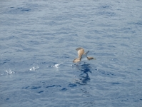 Dolphins08.jpg