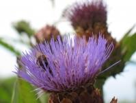 BotanicalGarden03.jpg